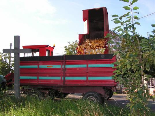 Tempo di raccolta per il mais. Clicca per la prossima.